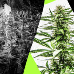 The Best Way to Possess a Legal Medical Marijuana Card